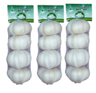 Garlic exporter in India